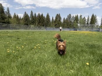 Quesnel Dog Park
